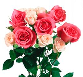 Букет роз для фотошопа на прозрачном фоне