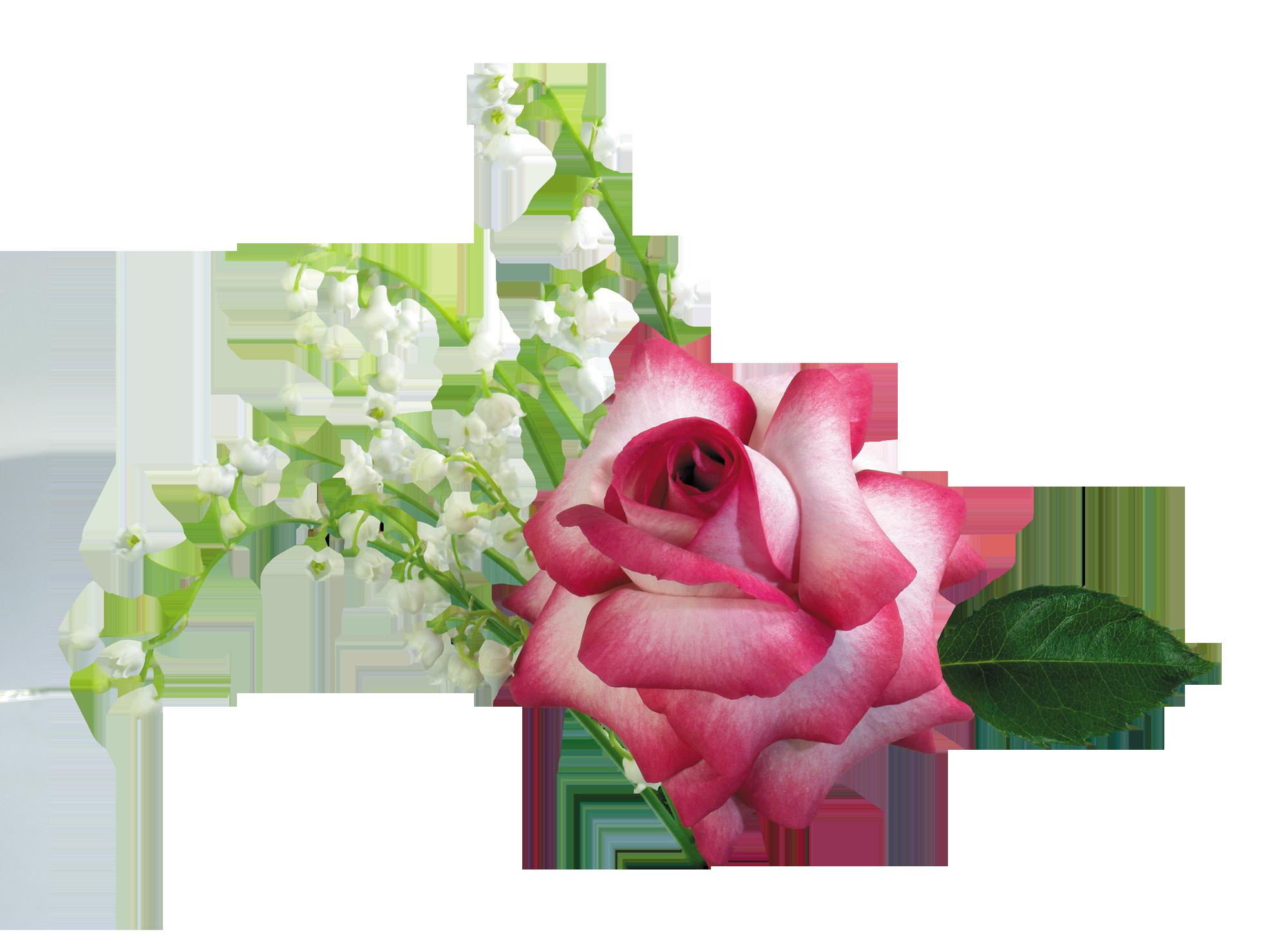 Открытки роз видео